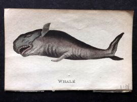 Holloway 1804 Hand Col Fish Print. Whale